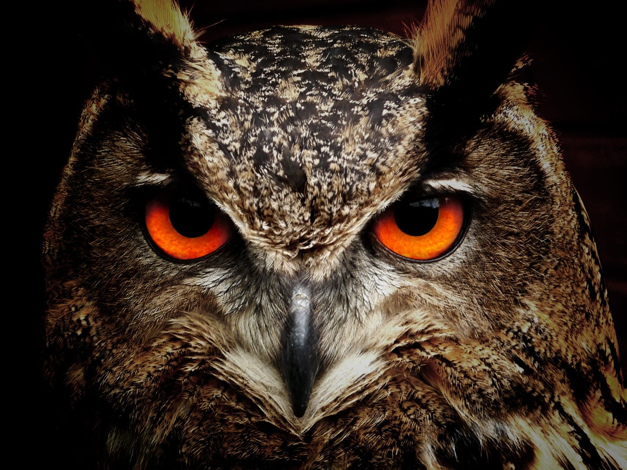 Owl - Leaving terrorists no place to hide online